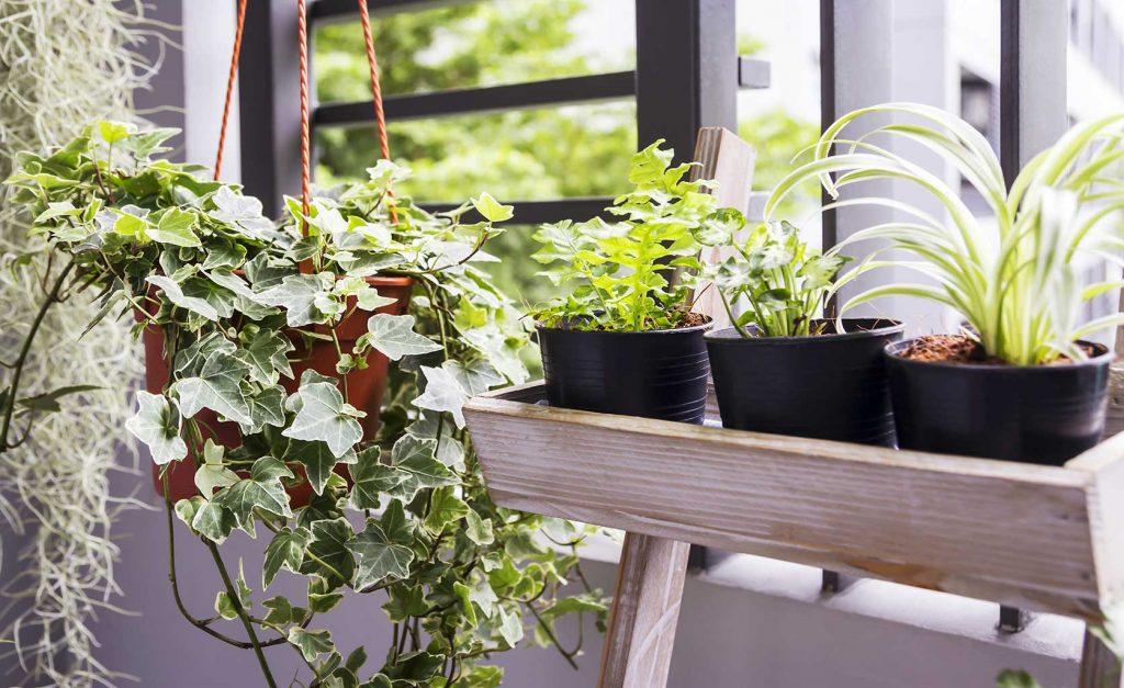 décoration plantes terrasse